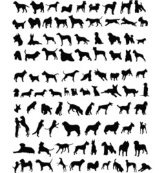 100 dogs vector image vector image