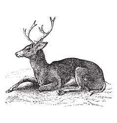 Mule deer vintage engraving vector image vector image