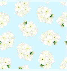 Arabian jasmine on light blue background vector