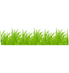 backgrounds green grass vector image