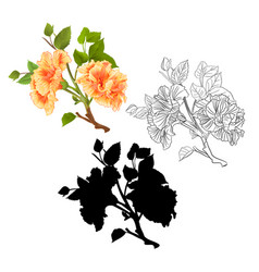 branches yellow hibiscus tropical flowers natural vector image