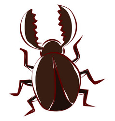 brown beetle bug on white background vector image