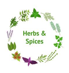 cartoon color herbs spices banner card circle vector image