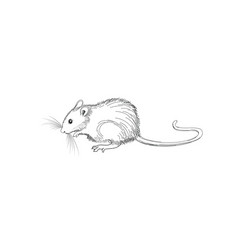mouse sketch hand-drawn line art animal isolated vector image