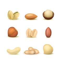 realistic detailed 3d different types nuts set vector image