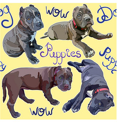 seamless background with pitbulls vector image