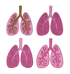 set of sketch color lungs isolated on white vector image