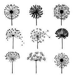 set of doodle dandelions decorative elements for vector image vector image