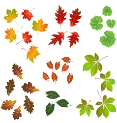 Autumn leaf collection for designers vector image vector image