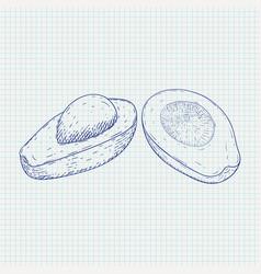 Avocado sketch on notebook sheet background vector