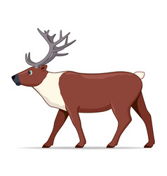 Caribou animal standing on a white background vector