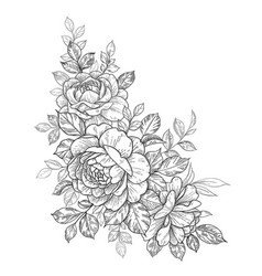 hand drawn floral composition with roses and vector image