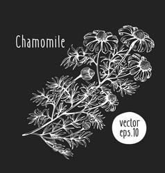 Hand drawn flower chamomile sketch on chalk vector