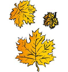 maple leaf isolated on white background autumn vector image