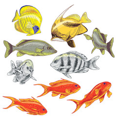 colored reef fishes set vector image