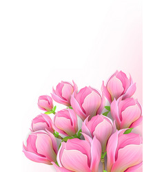 beautiful background with magnolia flowers vector image