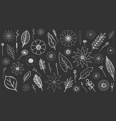 botanical hand-drawn set on black chalk board vector image