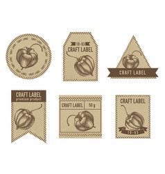 craft labels with physalis vector image