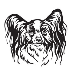 Decorative portrait of papillon dog vector