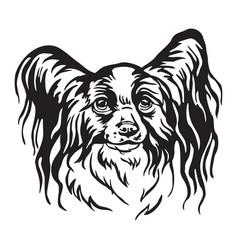 Decorative portrait papillon dog vector