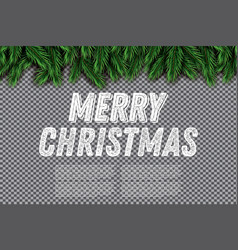 fir branch on transparent background merry vector image