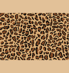 leopard pattern design vector image