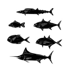 sketch of sea fish vector image