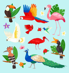 tropical birds exotic parrot or flamingo vector image