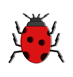 cute ladybug insect vector image