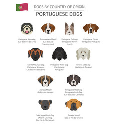Dogs by country of origin portuguese dog breeds vector