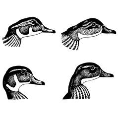 ducks faces vector image