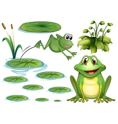 Frog and leaves vector
