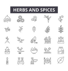 herbs and spices line icons signs set vector image