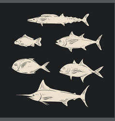 sketch of sea fish black and white color vector image