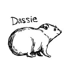 dassie - sketch hand drawn vector image vector image