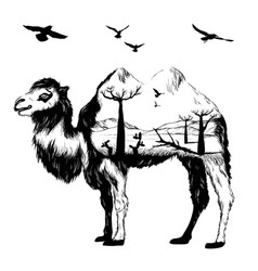 double exposure hand drawn camel vector image vector image