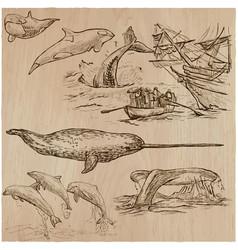 Cetaceans cetacea - an hand drawn pack vector