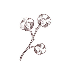 Drawing cotton branch vector