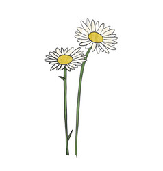 hand drawn daisy flower vector image