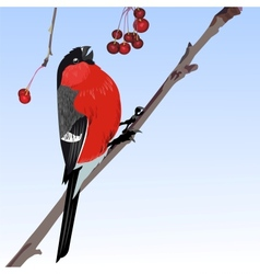The one bullfinch vector image