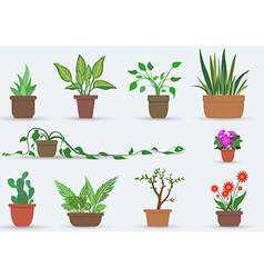 House Plants vector image