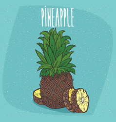 Isolated fruit of ripe ananas with slices vector