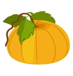 pumpkin with green leaves vector image