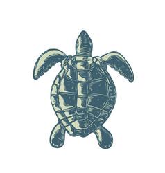 Sea turtle top view scratchboard vector