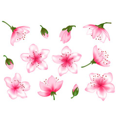 spring flower tree blossom set vector image