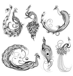tattoo art design peacock collection vector image