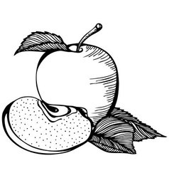 Apple monochrome drawing vector