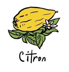 Citron fruit vector
