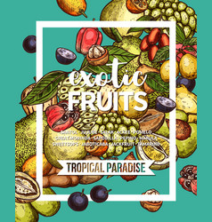 exotic tropical fruit sketch banner of food design vector image