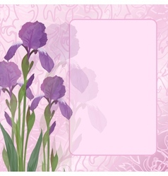 Flowers iris on pink background vector